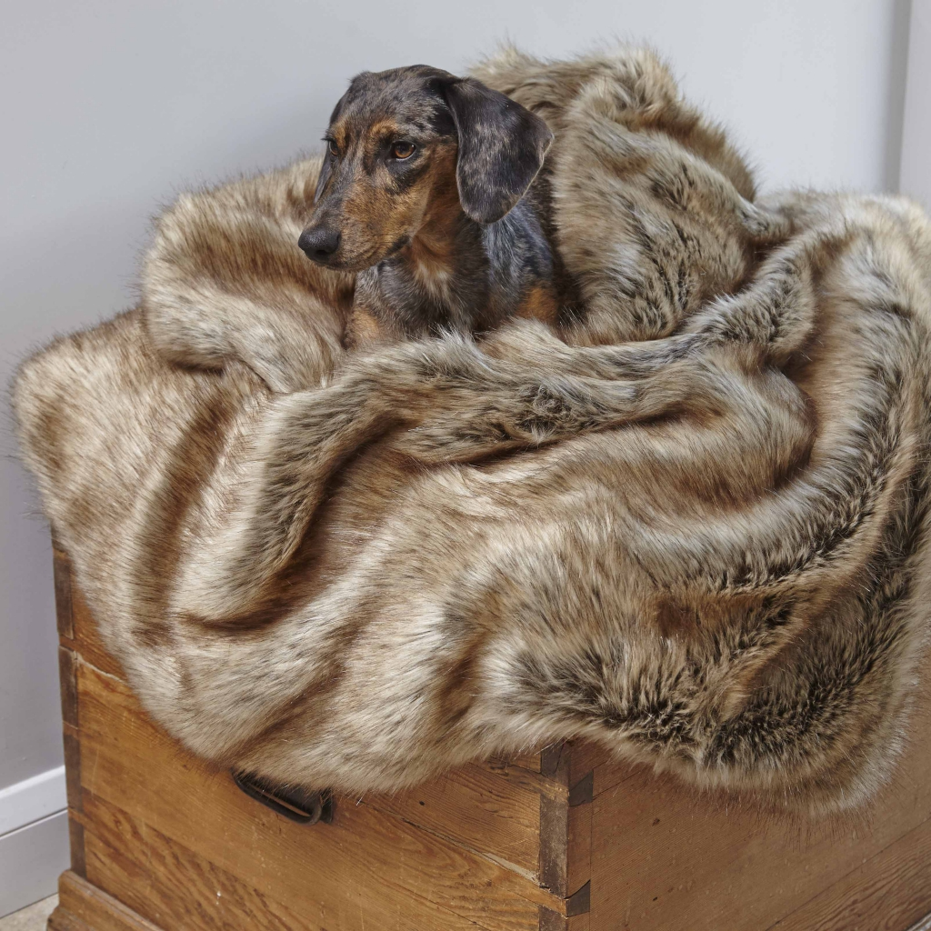 Golden Husky Couvertures de chiens